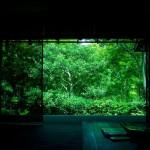 green_n_black