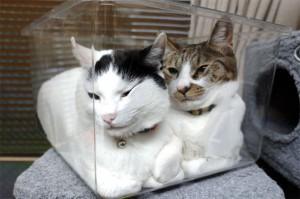 cat_in_a_clear_case