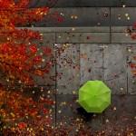 APTOPIX Fall Colors.jpg